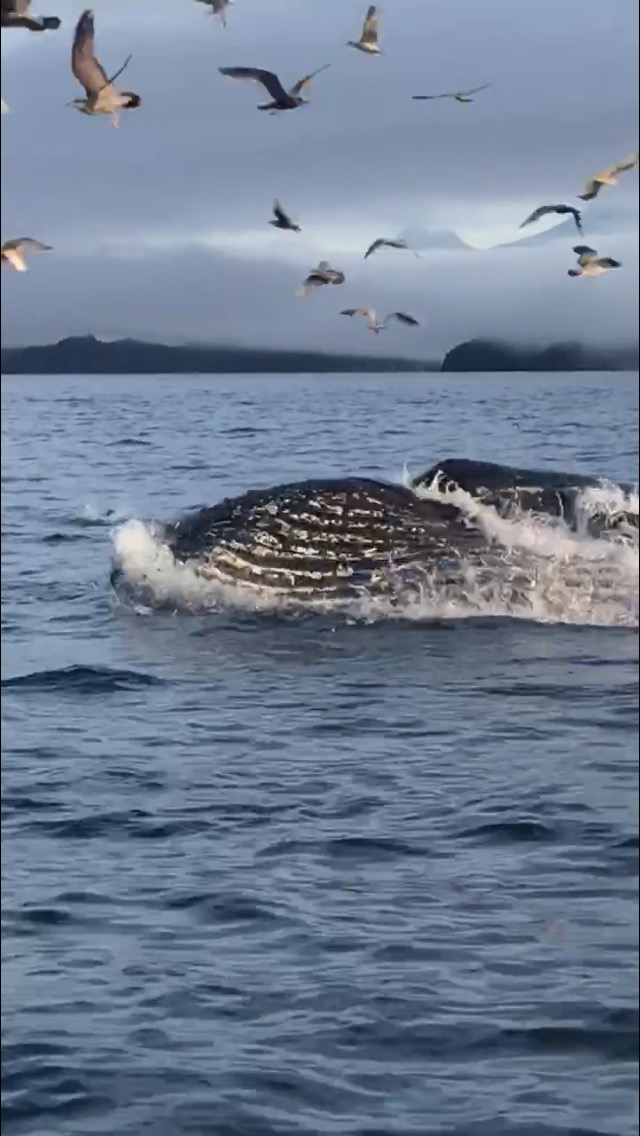 Vancouver Island water taxi tours