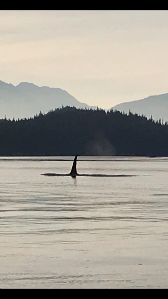 Vancouver Island Killer Whales